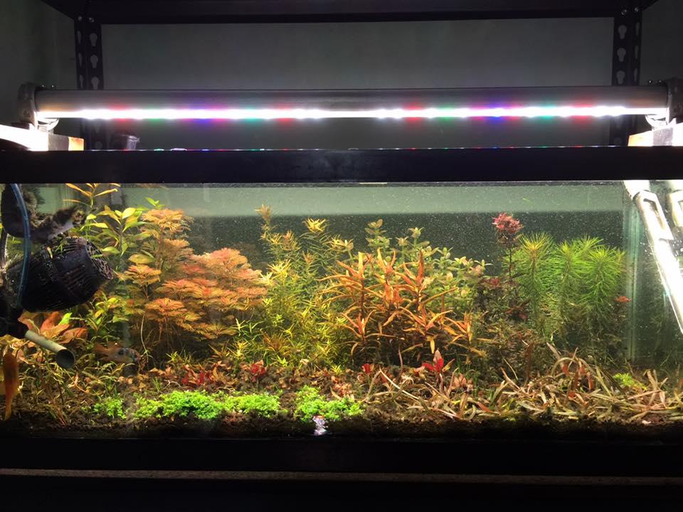 BML Dutch & TMC AquaRay Vs. Build My LED   Marine Aquarium LED Study azcodes.com